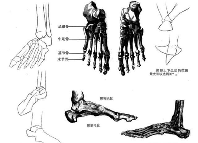 在漫画中画脚不像素描结构图那样复杂,只要明确表现出脚部的结构和