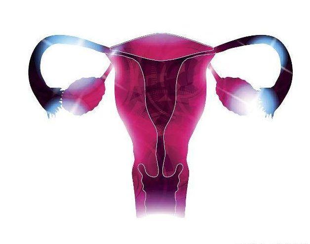 子宫平面结构图