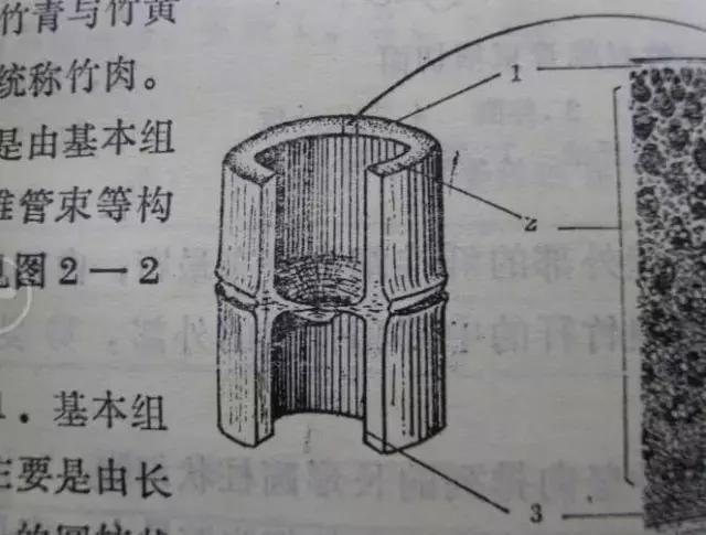 如何刻竹子及竹节结构|竹节|竹子|磨头_新浪网