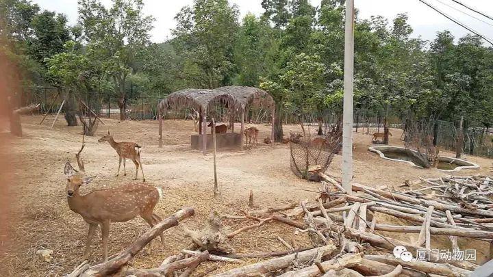 厦门翔安有个野生动物园,正式开园啦!来看看都