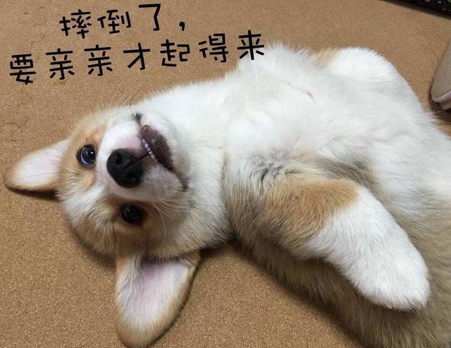 狗狗表情包_狗狗表情图配字图片
