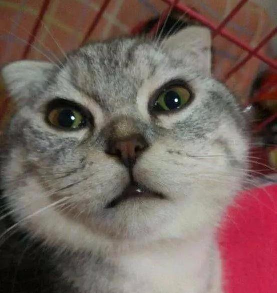 """猫咪醒来发现自己的下面的""""蛋蛋""""没有了,猫咪一脸的抓狂!"""