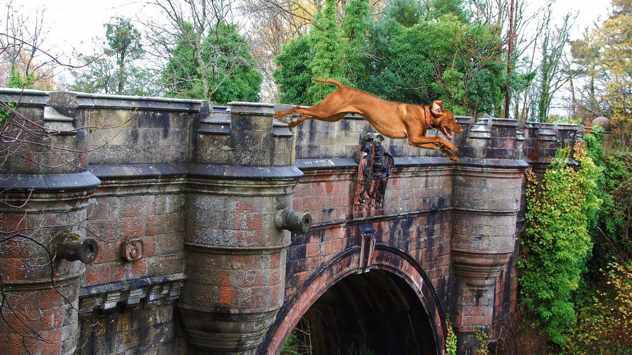 """英国最诡异的桥,700条狗在这里跳桥自杀,""""凶名""""远播全球!"""