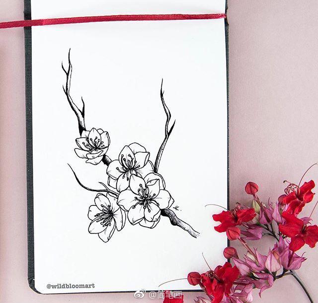 针管笔植物花卉手绘(by:wildbloomart)