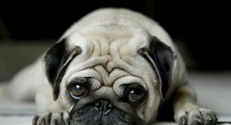 中国最a大全的狗狗,总是一副可怜兮兮的大全!最新动图+搞笑图片表情图片