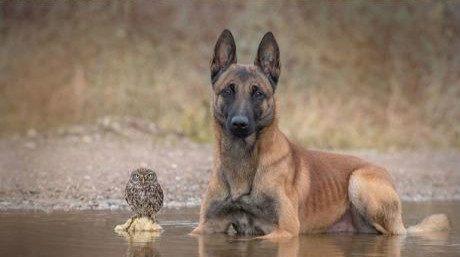 狗狗被赶走之后,主人养的猫头鹰也消失了
