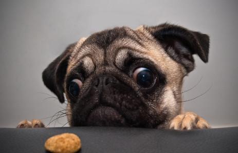 中国最a表情的狗狗,总是一副可怜兮兮的表情!贱和尚包表情图片