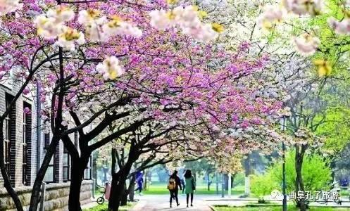 旅游地图|曲阜春季赏花旅游秘籍攻略哈密旅游敦煌图片