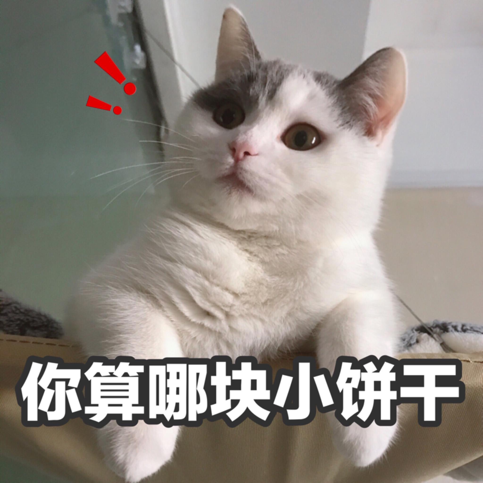 投稿自:@蓝蓝漆   猫咪表情包274:好奇…孤独弱小无助…你算哪块小饼图片