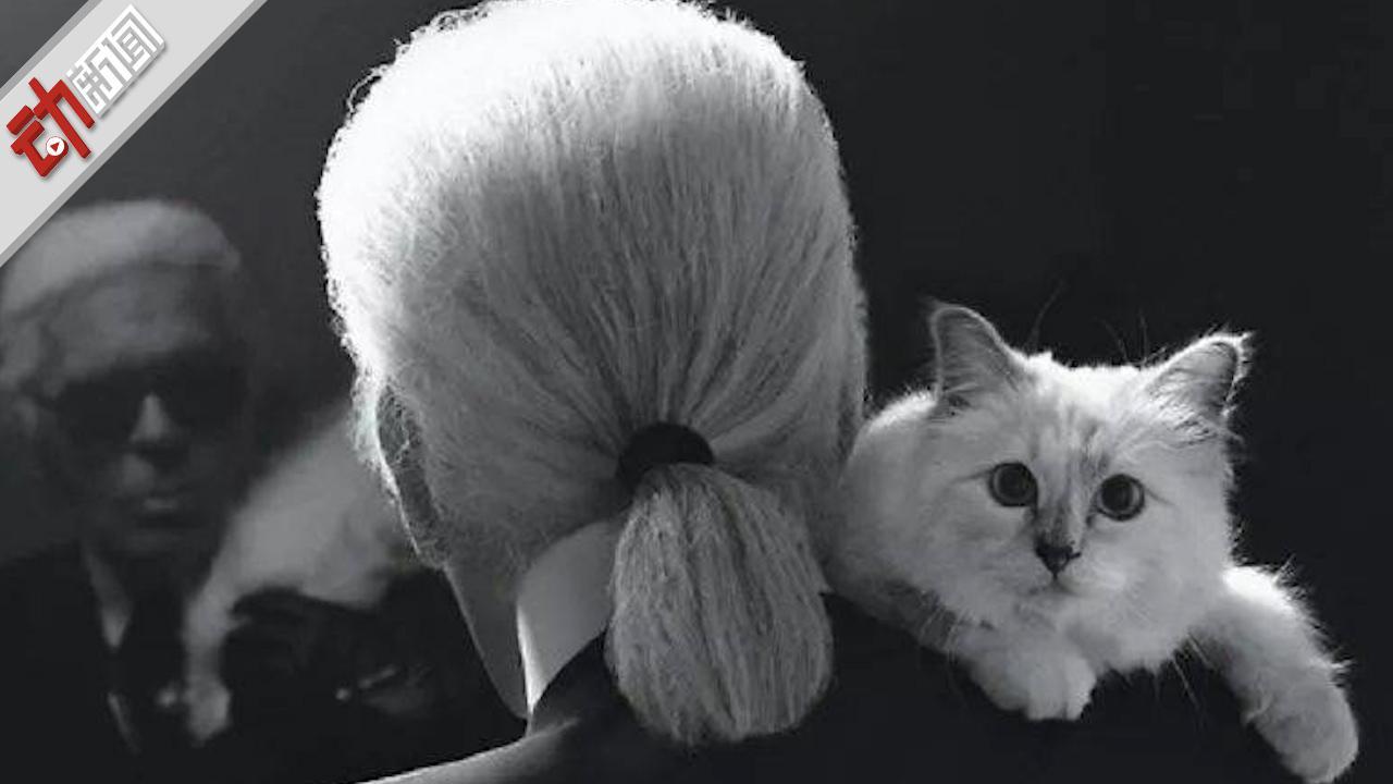 """作为""""老佛爷""""晚年最重要伴侣 爱猫能否继承其上亿美元遗产?"""