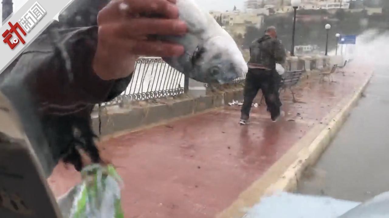 """""""下鱼""""了!地中海岛国马耳他遭遇风暴 鱼被吹上岸路人捡拾"""