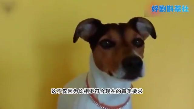 """我国最为""""珍稀""""的土狗,被称为""""狗中大熊猫"""",目前只剩9只"""