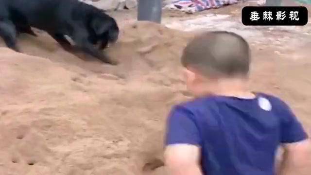狗崽:小老弟学着点,看好了土是这么挖的!