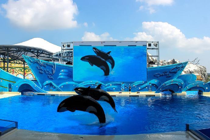 一场精彩的虎鲸科普秀表演,原生态还原虎鲸的霸气雄姿!