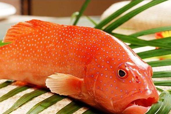 """中国""""最贵""""的4种海鲜,第1种价值百万元,第4渔民看见不愿捡"""