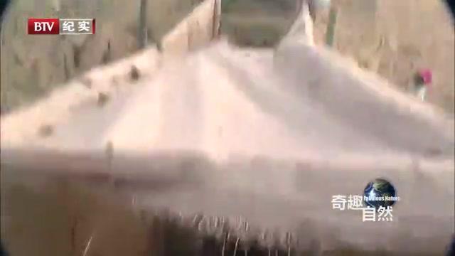 为避免羚羊互相攻击,保护者们竟给它们的角套上塑料管,好滑稽!
