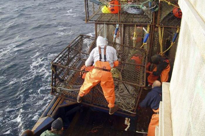 挪威遭帝王蟹入侵,当地渔民头疼不已,网友:让它来中国试试