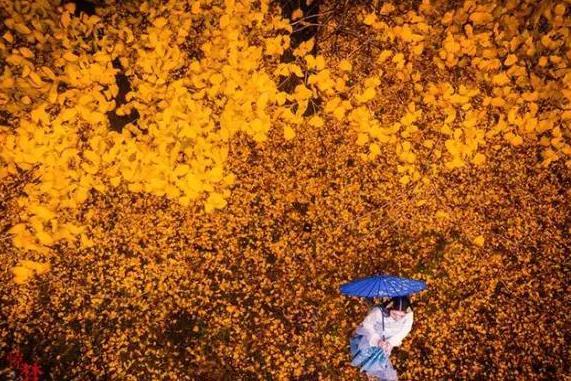 腾冲银杏村即将进入最佳季:这7个拍摄小技巧 你肯定用得到
