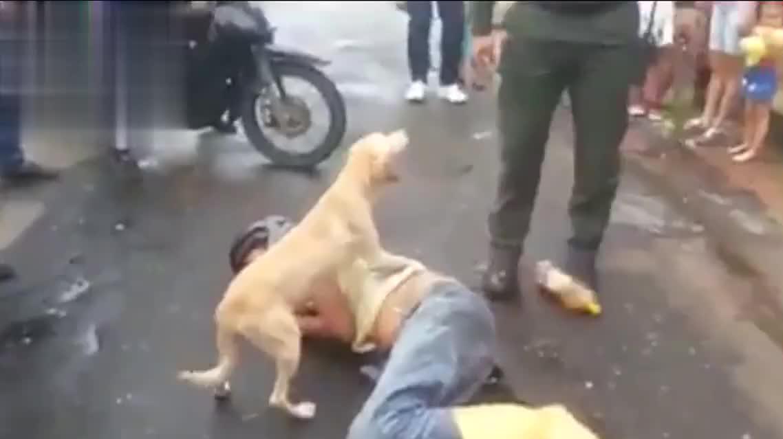 替主人操心的狗,男子醉倒在路旁,忠犬全程守护感动路人