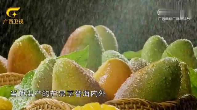 """第一书记:田阳县三同村被誉为""""芒果之乡"""",甘甜味美品种优良"""