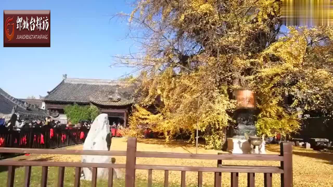 陕西汉中千年银杏树爆火,游客守寺外狂抢票,游客:等了七个小时