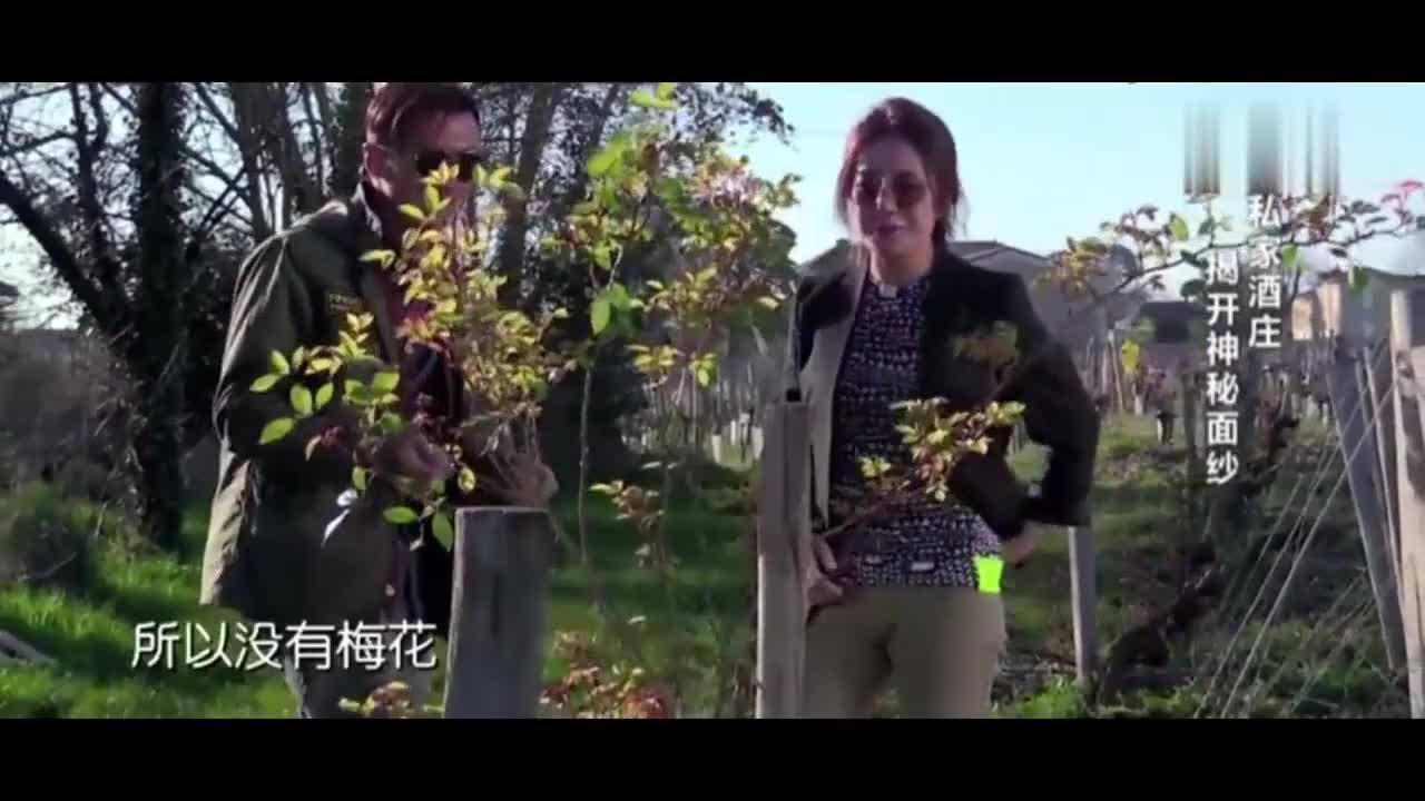 谢霆锋做客赵薇酒庄进入葡萄园让人眼前一亮真的是太大了