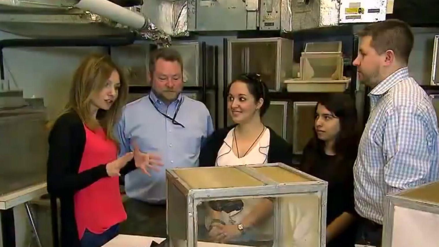转基因蚊子让人后怕,本想降低蚊子存活率,结果却产生了新变种!