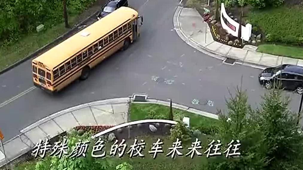 不得不服美国校车优先特权,校车就是红灯