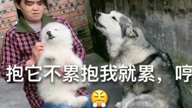 主人抱着小狗,洛洛竟然吃醋了,看完都别笑