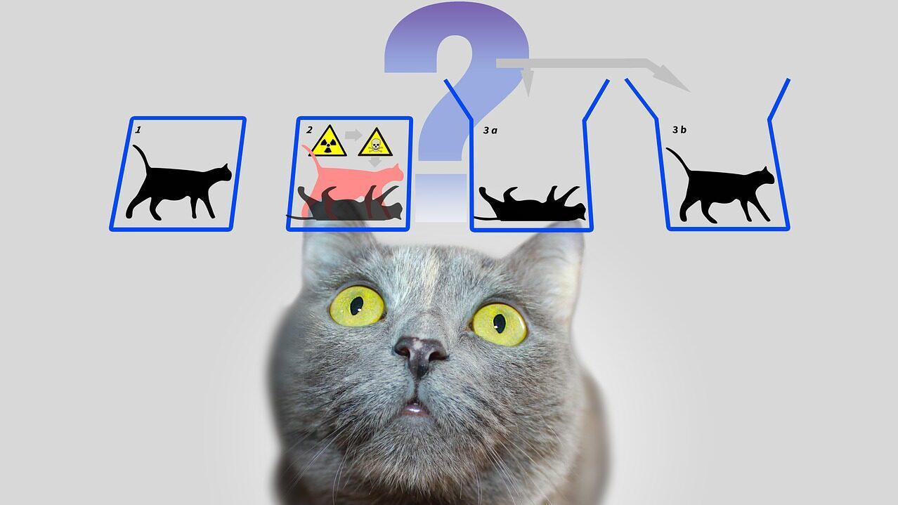 薛定谔的猫和平行宇宙有关?动画解释原理,量子力学其实很有趣!