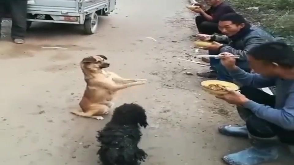 懂事的流浪狗,善良的农民工,多么和谐的画面啊!