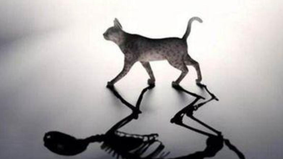 意识可以决定物质?薛定谔的猫将带人类走进量子世界和平行宇宙
