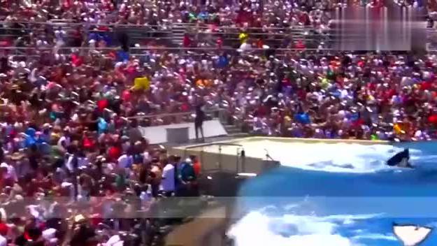 虎鲸表演完饲养员不给奖励,想不到上万观众成为它发泄的对象!