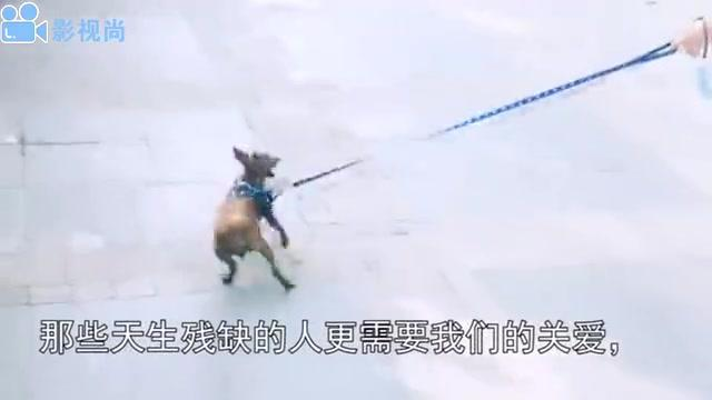 主人给天生残疾的狗狗买了一只假手,狗狗戴上后立马开心的大笑
