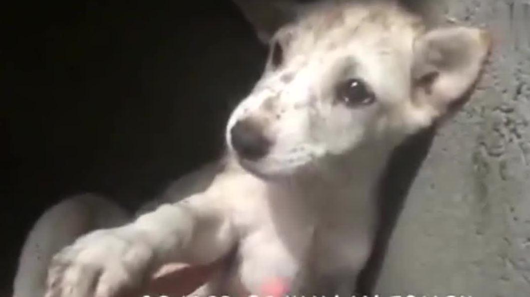 被遗弃在巴厘岛的街道上的狗狗害怕寒冷和肮脏