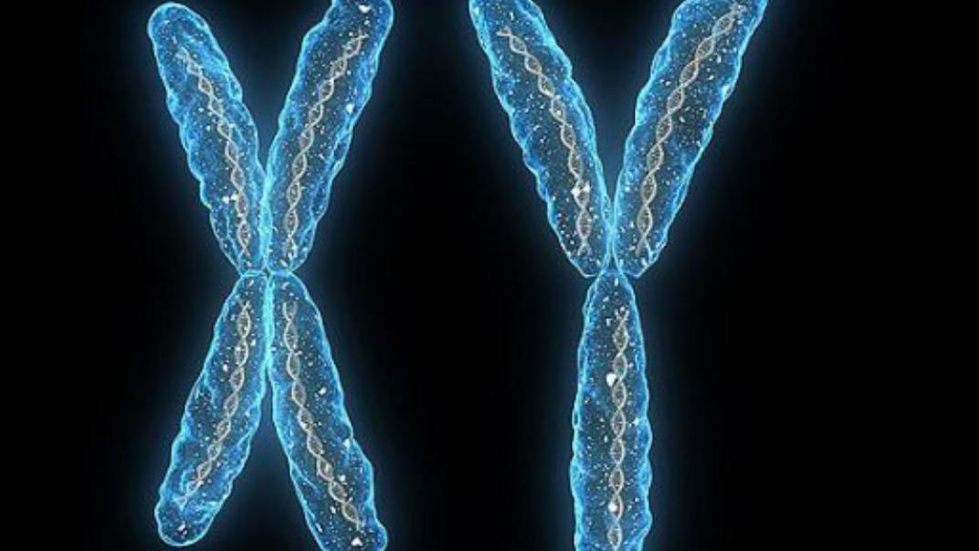 科学家研究发现Y染色体正在消失,未来还会有男性吗?
