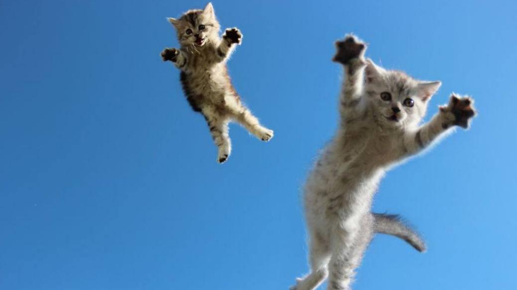 小猫咪骨骼清奇,身子软得像水,是个练武奇才啊!