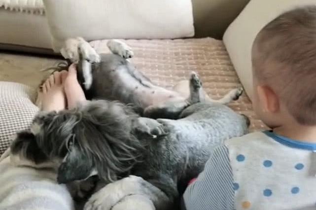 狗狗吃醋生气的朝小主人大吼大叫,宝宝反手一巴掌,宝妈笑喷!