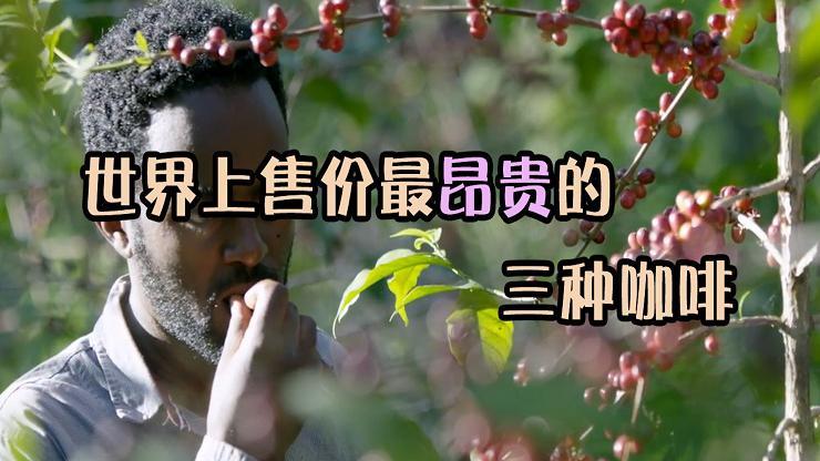粑粑也喝不起了!世界上售价超贵的咖啡豆,一小把售价4000元!