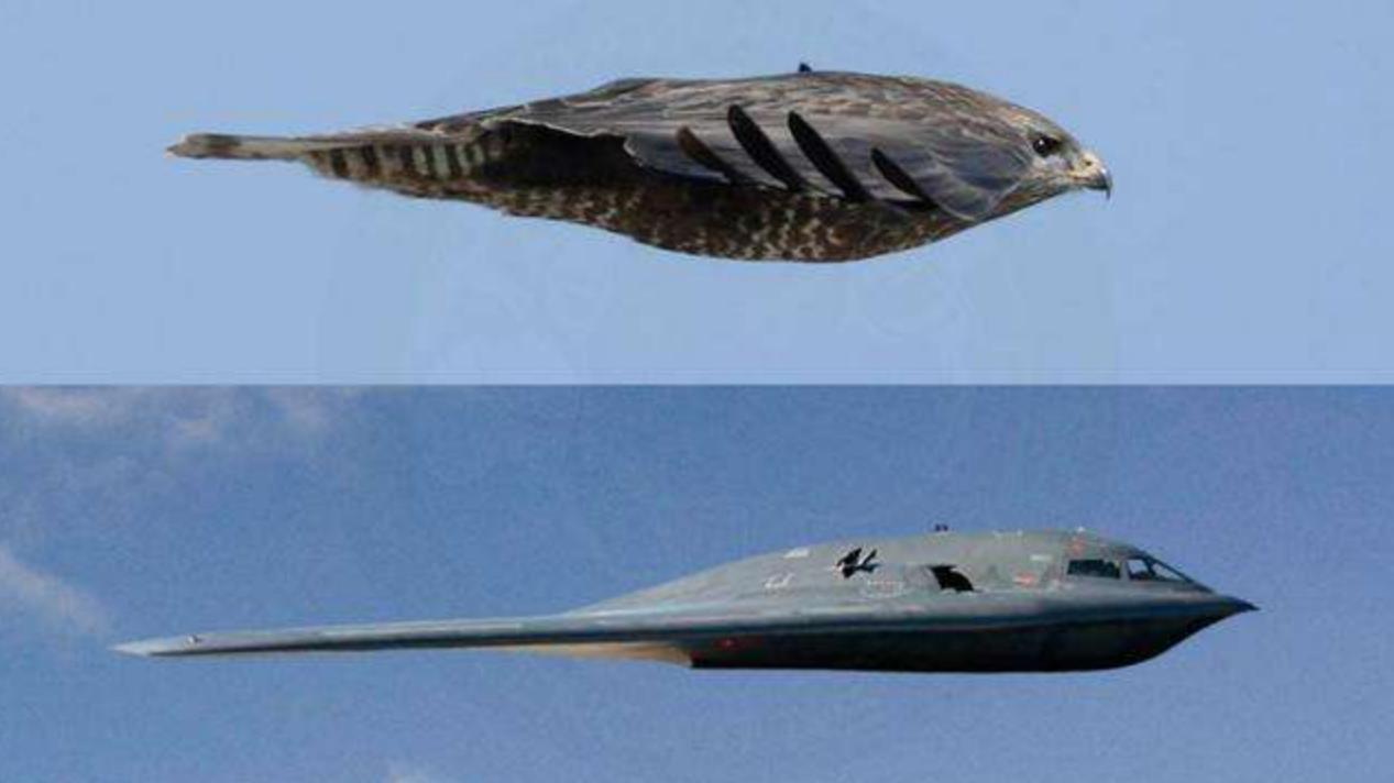 世界上最快的动物,瞬时速超过高铁,美国轰炸机都参考其结构