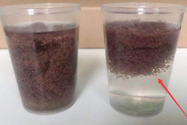 如何辨别泰国海藻面膜真假?教你如何真伪辨别泰版假海藻和真海藻