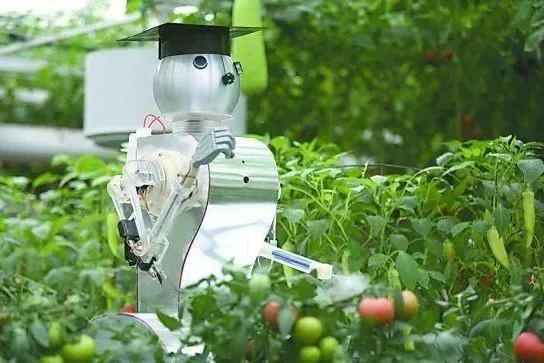 白天电脑种菜,晚上机器人值班,日本智慧农场让人惊叹