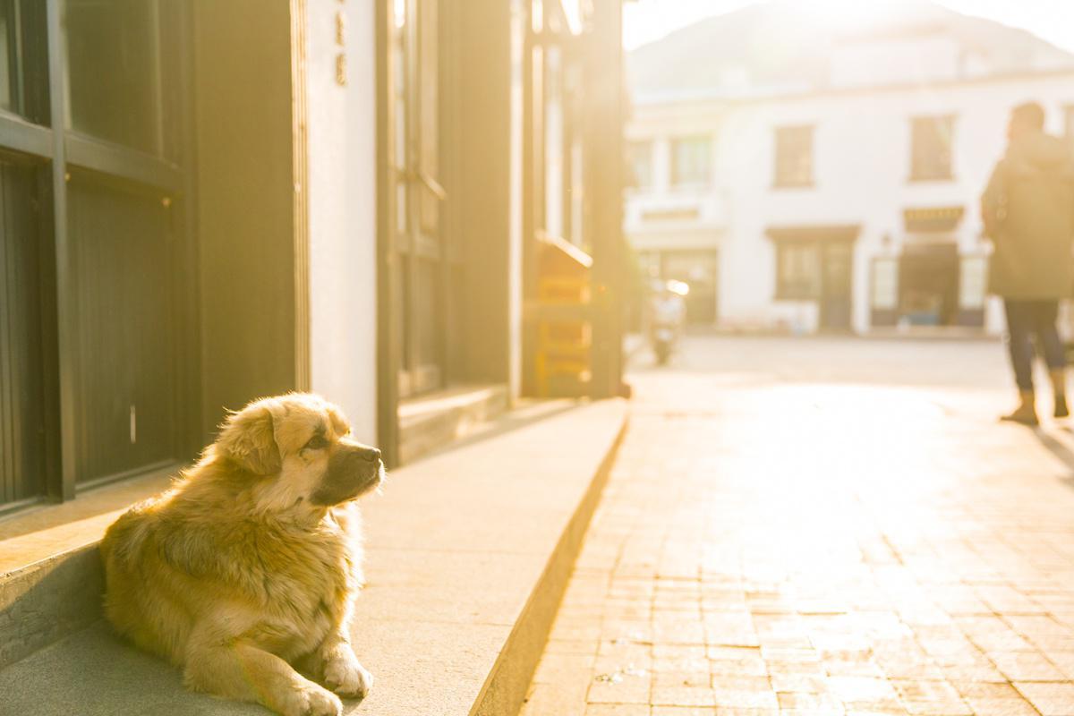 淡季的花鸟岛,晒太阳,逗小狗玩