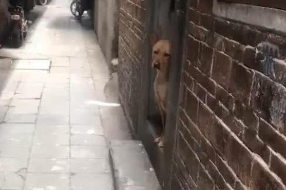被迫把土狗寄养在奶奶家,前脚一出门,狗狗的表情让人心疼