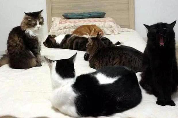 女子上班忘关电热毯,下班推开门后,看到自己床上场景凌乱了!