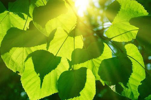 未来地球上的能源来自植物?科学家破解光合作用奥秘,获取新能源