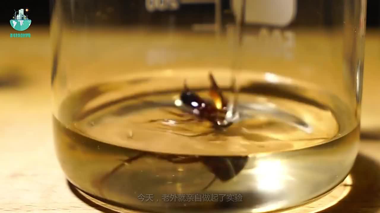 蟑螂的生命力到底有多顽强老外用硫酸测试结果让人不敢相信