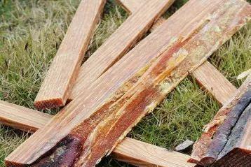 松木家具为啥要脱脂处理?樟子松和马尾松,白蚁更喜欢谁?