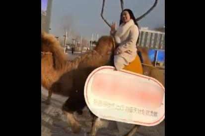 两美女骑骆驼上班, 称倡导绿色出行, 大多数人表示质疑