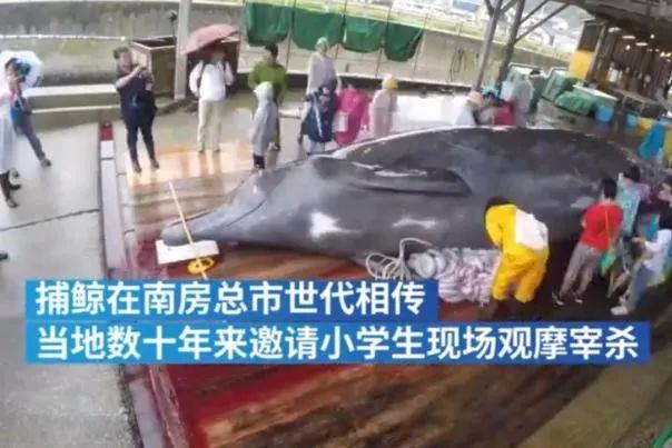 日本十岁学生参观捕杀鲸鱼,校长引以为豪,要其写触摸感受